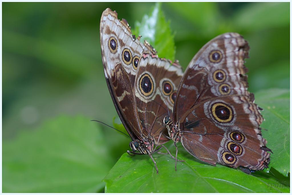 La serre aux papillons la queue en yvelines - Page 5 IMGP0633R