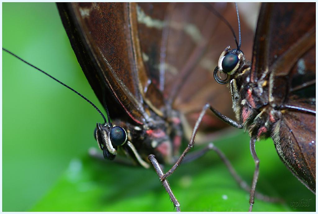 La serre aux papillons la queue en yvelines - Page 5 IMGP0634R