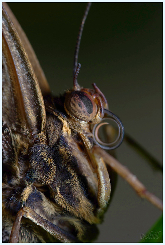 La serre aux papillons la queue en yvelines - Page 4 IMGP0681R