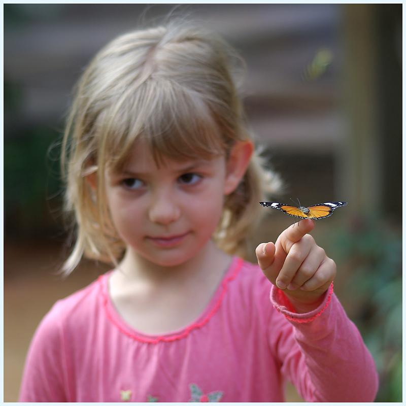 La serre aux papillons la queue en yvelines - Page 3 IMGP0690R