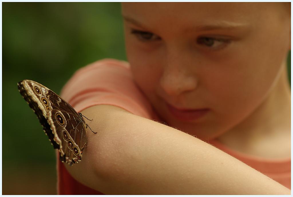 La serre aux papillons la queue en yvelines - Page 3 IMGP0711R